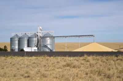 duże ilości ziarna ze zbóż przed silosem
