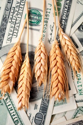 pszenica na bankotach