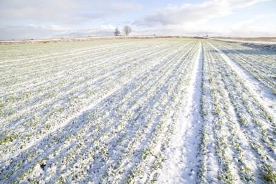 uprawne pole pokryte śniegiem