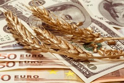 kłosy pszenicy na dolarach i euro