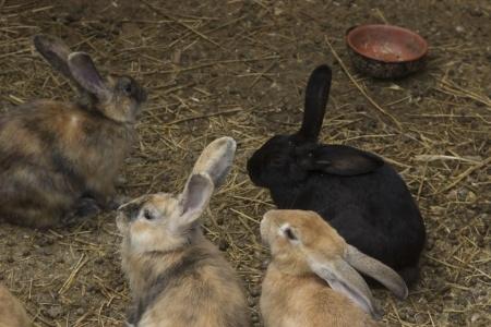 mała hodowla królików