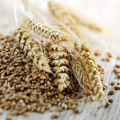 kłosy i ziarna zbóż