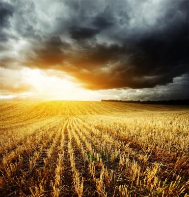 czarne burzowe chmury nad polem pszenicy
