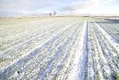 pole polryte śniegiem