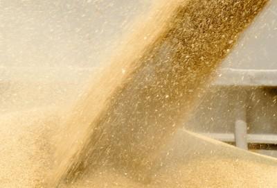 ziarno zbóż zsypywane do kontenera