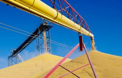 zgromadzone po żniwach ziarno zbóż