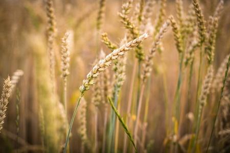 rośliny na polu