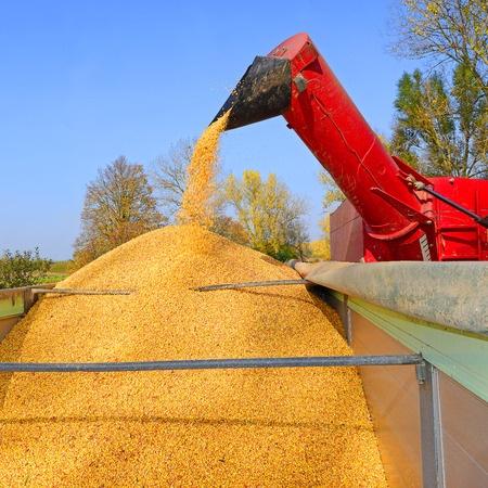 kombajn zbierający kukurydzę