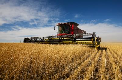 kombajn na polu zbóż